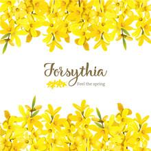Forsythia Suspensa, Fluffy Blo...