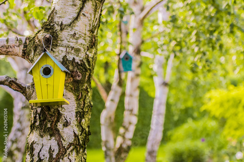 Fotografiet wooden birdhouse on the birch