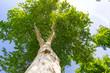 Leinwanddruck Bild - Tree Crown Sunshine