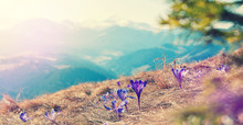 Mountains Landscape In Spring....