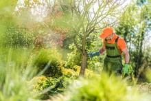 Checking Garden Trees Health