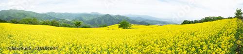 Poster Jaune 福島県三ノ倉高原 菜の花畑