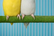 Close Up Leg Of  Bird Parrot P...