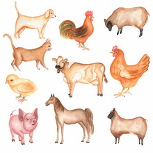 Watercolor Hand Drawn Farms Animal Set. Cute Domestic Pets Watercolor Illustration. Horse. Hen. Pig. Sheep. Rooster. Chicken. Dog.cat. Cow