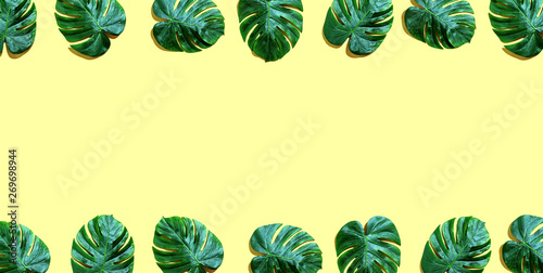 Photo Stands Asia Country Tropical plant Monstera leaves overhead view flat lay