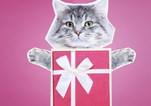 Contemporary Art Collage. Concept Of Memphis Style Posters. Abstract Minimalism And Surrealism. Funny Gray Cat With Cute Eyes Holds Gift In His Paws On Pink Background.