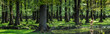 canvas print picture - Wald-Panorama mit Hirsch