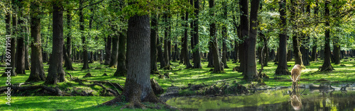 Foto auf Leinwand Hirsch Wald-Panorama mit Hirsch