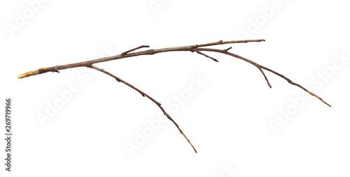 Fotografia  Dry twig