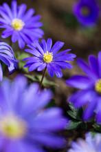 Frühlingsblumen II