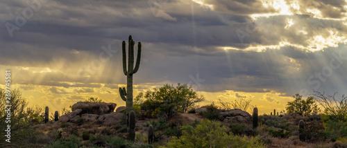 Stickers pour porte Cactus Sun Rays Shining on Desert Landscape In Arizona