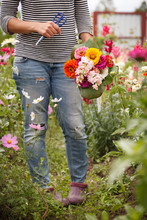 A Beautiful Bouquet Of Freshly Cut Dahlia Flowed Common Zinnia And Snapdragon Flowers, In The Hands Of A Young Woman Against The Backdrop Of A Blooming Garden. Gardening. Rural Life