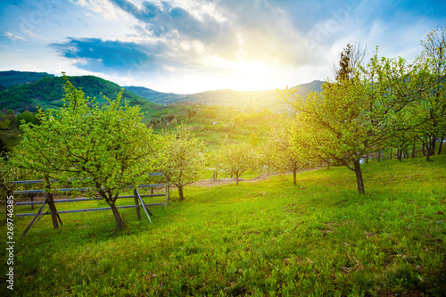 Beautiful orchard in hills area in spring Canvas