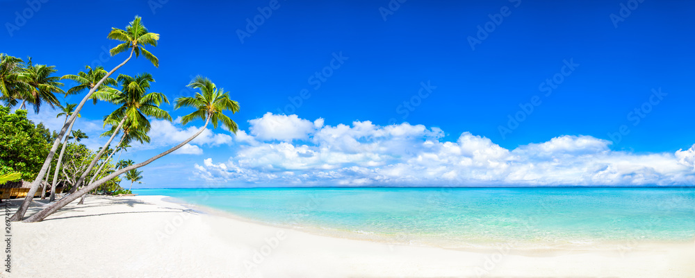 Fototapeta Beautiful tropical island with palm trees and beach panorama as background image