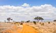 canvas print picture - Safari road in Kenya