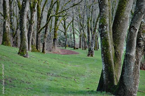 Valokuvatapetti Garry Oak meadow