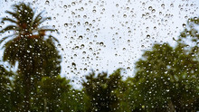 Drops Of Rain On The Window; Blurred Trees In The Background