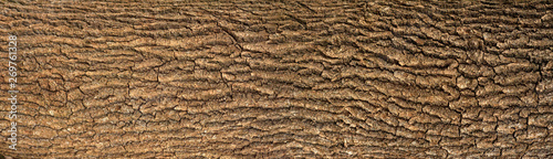 Embossed texture of the bark of oak with green moss Wallpaper Mural