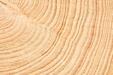Large Circular Piece Of Wood C...