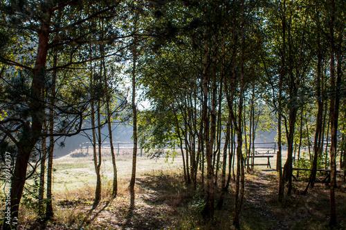 Fototapeta morning in forest obraz na płótnie