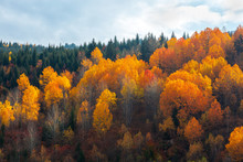 Colorful Trees In The Mountains Of Svaneti In The Fall. Beautiful Autumn Landscape