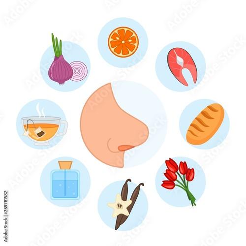 5 sense organs. Smell. Vector illustration. Fototapete