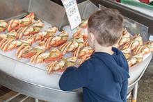 Boy Looking At Dungeness Crab At A Fish Market.