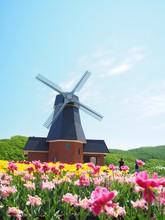 北海道風景 かみゆうべつチューリップ公園