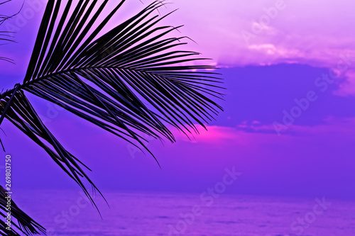 Fotobehang Donkerblauw sunrise Palm leaf branches or palm coconut tree leaves.