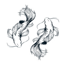 Beautiful Fishes Ink Drawing Vector