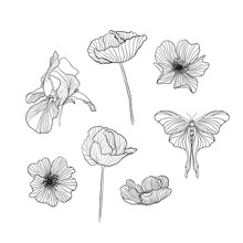 Set Of Drawn Flowers Outline