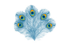 Peacock Feathers, Flat Style. ...