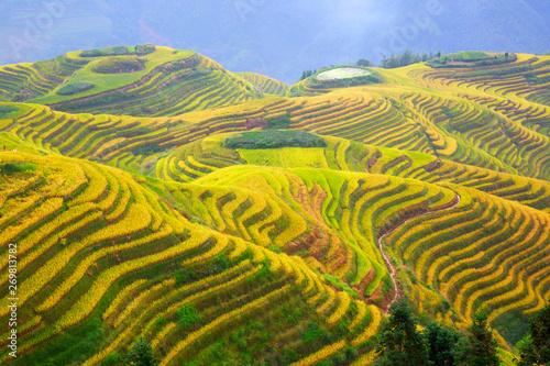 Longji Rice Terraces Fototapet