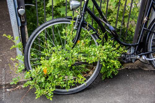 Foto op Canvas Hert altes überwuchertes Fahrrad am Zaun