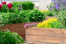 Raised Beds In An Urban Garden...