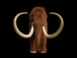 canvas print picture woolly mammoth, prehistoric mammal front view isolated with shadow on black background