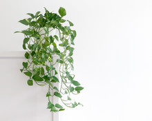 Bright Living Room With Houseplant On A Cupboard In A White Pot