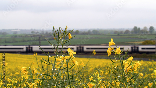 Foto auf Leinwand Khaki uk railroad next to rapeseed field and sheep on another side under overcast rain. railway landscape