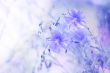 Delicate Blue Flowers Of Flax On A Beautiful Blurred Background. Dreamy Art Image, Beautiful Natural Background. Selective Focus.