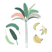 Palm Tree Hand Drawn Vector Il...