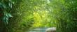 wasser im bambuswald
