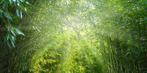 Panel Szklany Podświetlane Liście bambuswald