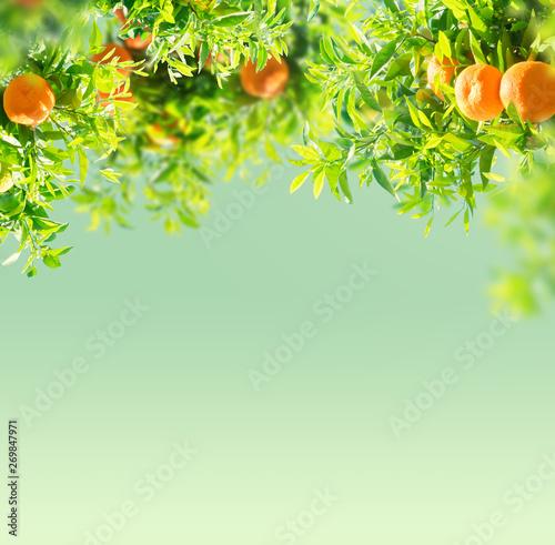 Tangerine tree garden