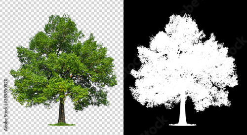 single tree on transparent with clipping path