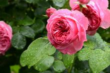 Blumen 1070