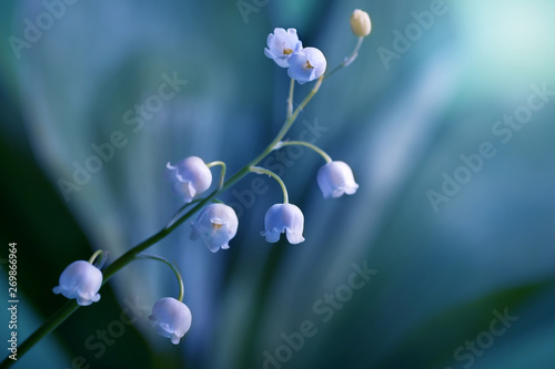 Foto auf AluDibond Maiglöckchen Blossoming lily of the valley in night time, close-up. Floral background