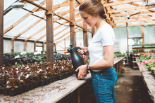 Female Florist Working Inside Greenhouse. Professional Woman Gardening In Greenhouse