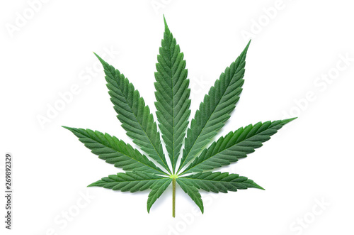 Fotografija  Green cannabis leaves isolated on white background