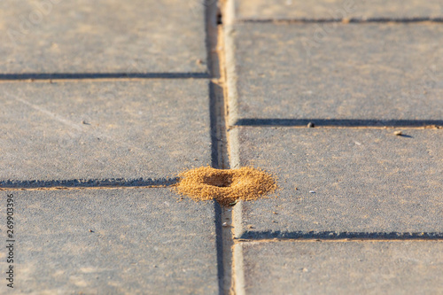 Photo View from top on small round anthill on cobblestone