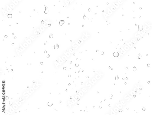 Obraz Vector rain water drops on white background. Pure realistic droplets condensed.  - fototapety do salonu